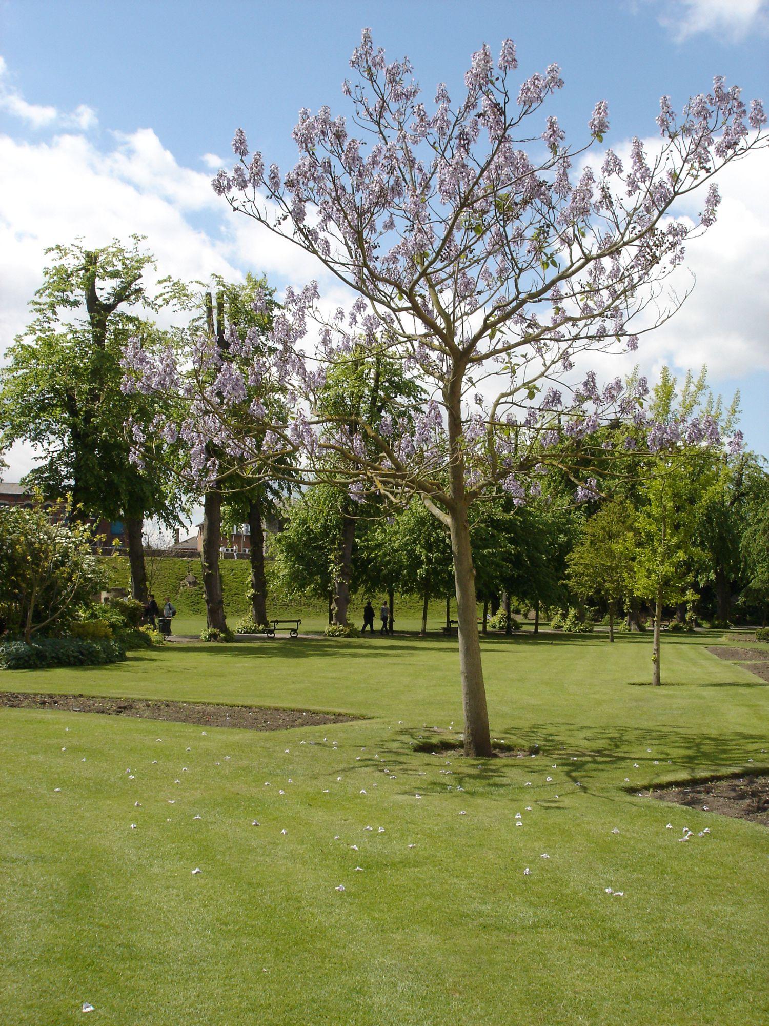 Dane John Gardens