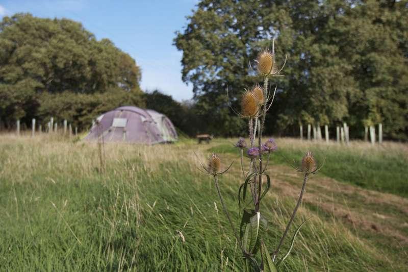 The Secret Campsite Brickyard Farm, Town Littleworth, Cooksbridge, Lewes, East Sussex, BN8 4TD