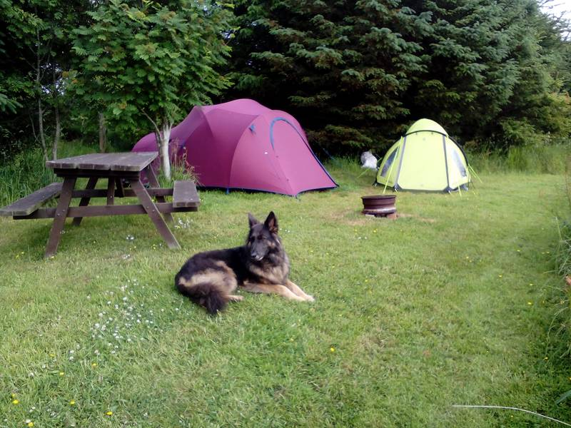 The best dog-friendly campsites in Scotland