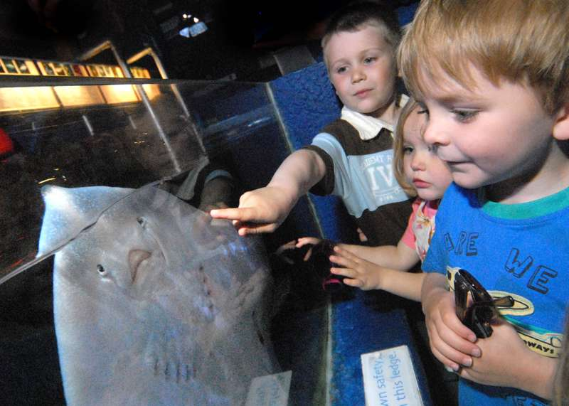 Ilfracombe Aquarium
