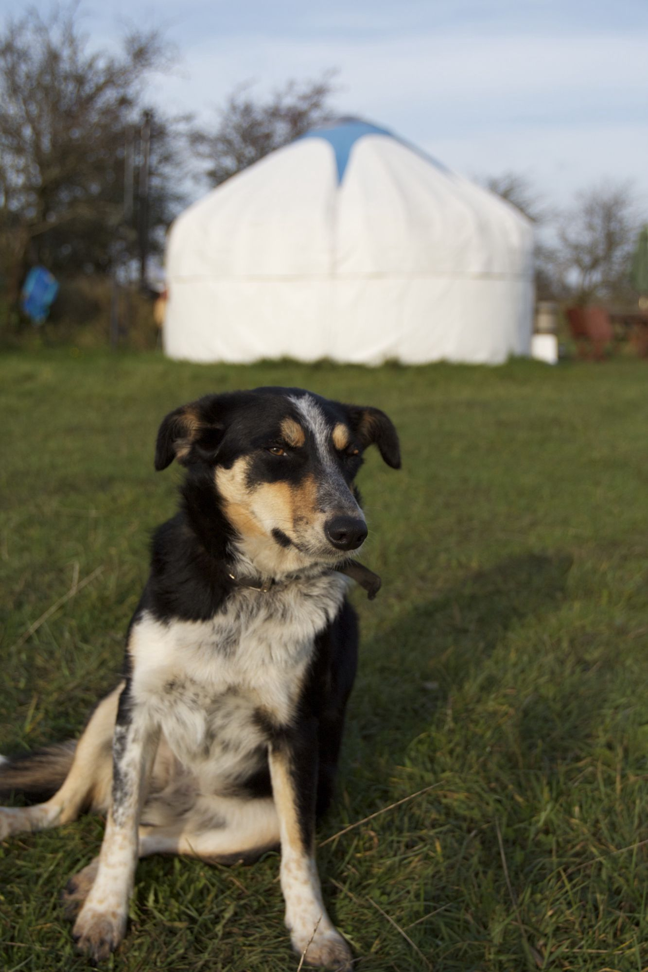 The best dog-friendly campsites in Cornwall – Cool Camping