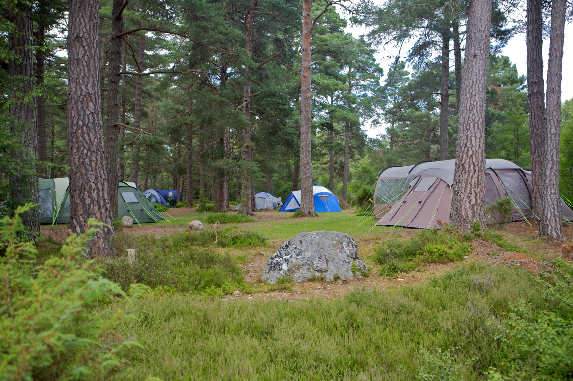Woodland Campsites – Camping in the trees – Cool Camping