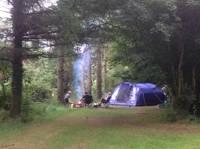 Woodland Wild Tent Pitch