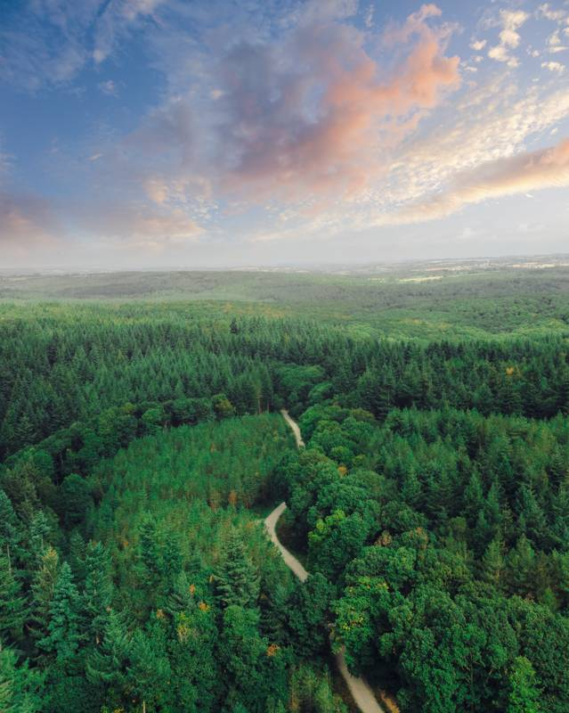 The Wyre Forest from the air!