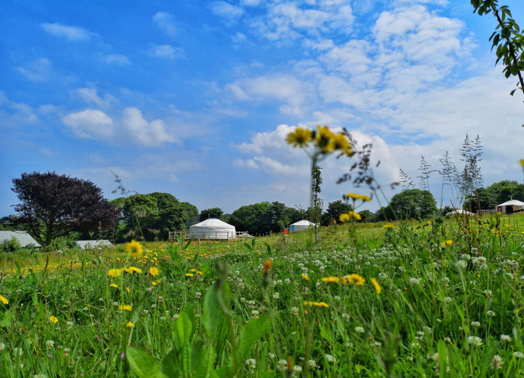Glamping in Newquay – Glampingly