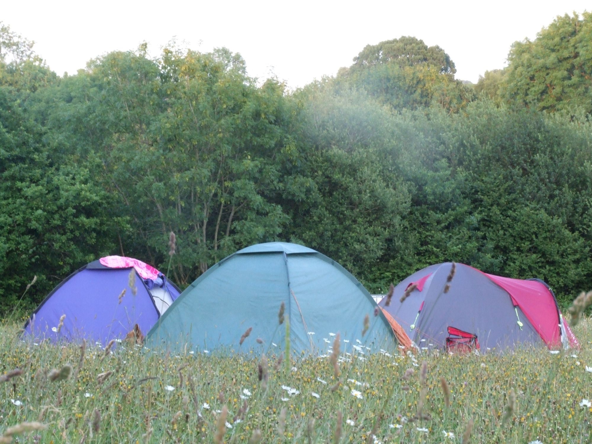 A proper rural campsite with streams, woodland and wildflower meadows to play in. Chose from the yurt and bell tents onsite or bring your own tent to pitch in the grassy meadow.