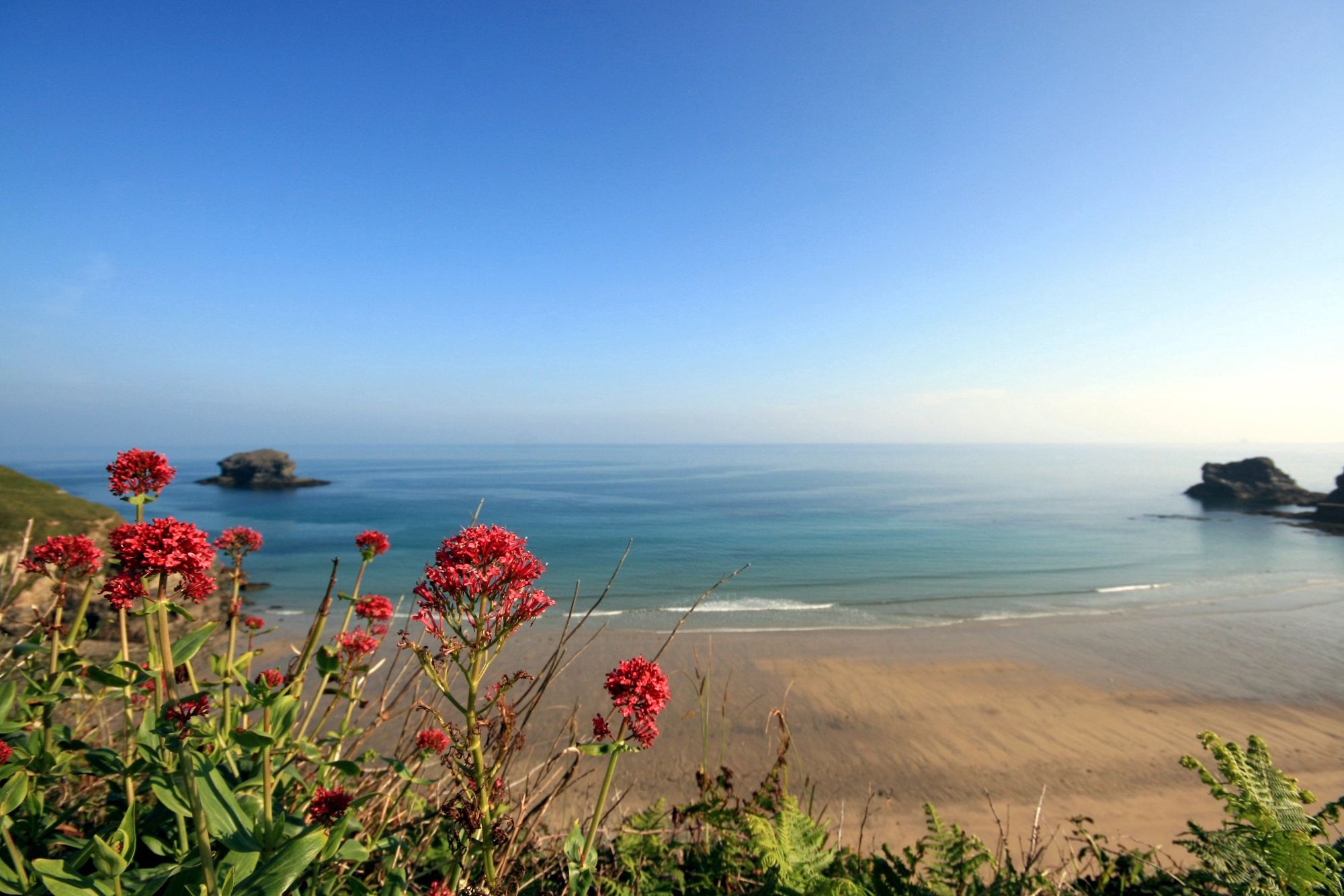 The 10 Best Dog-Friendly Beaches in Cornwall