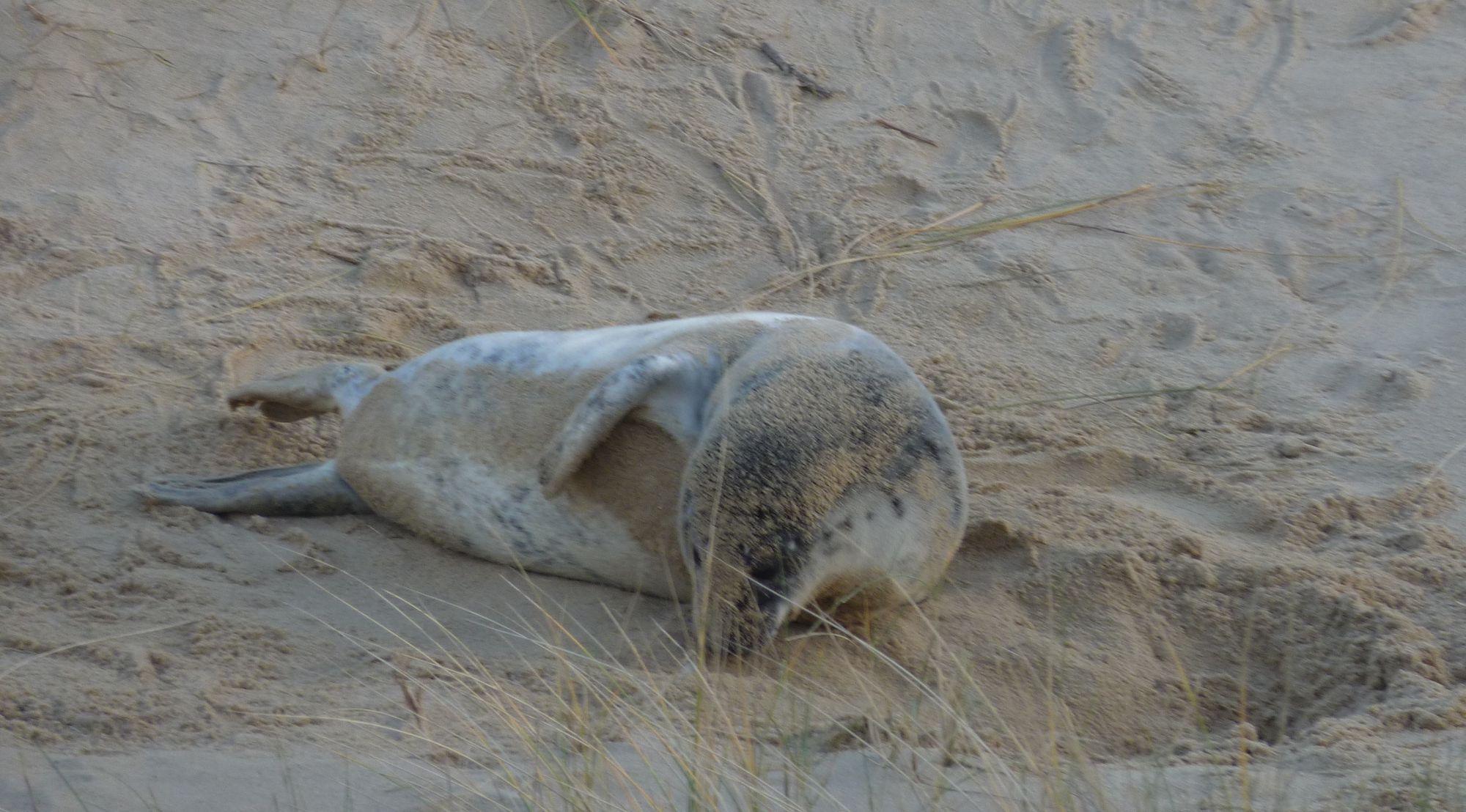 Seal Heaven at Horsey