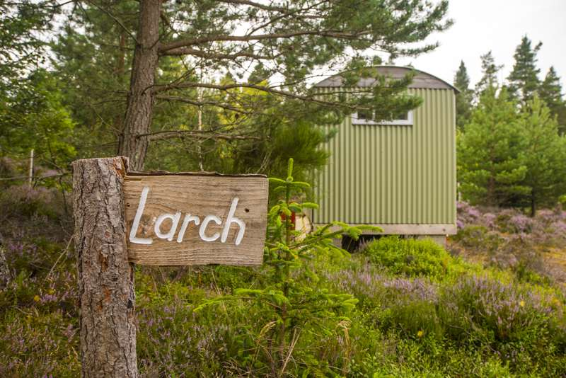 Larch Hut
