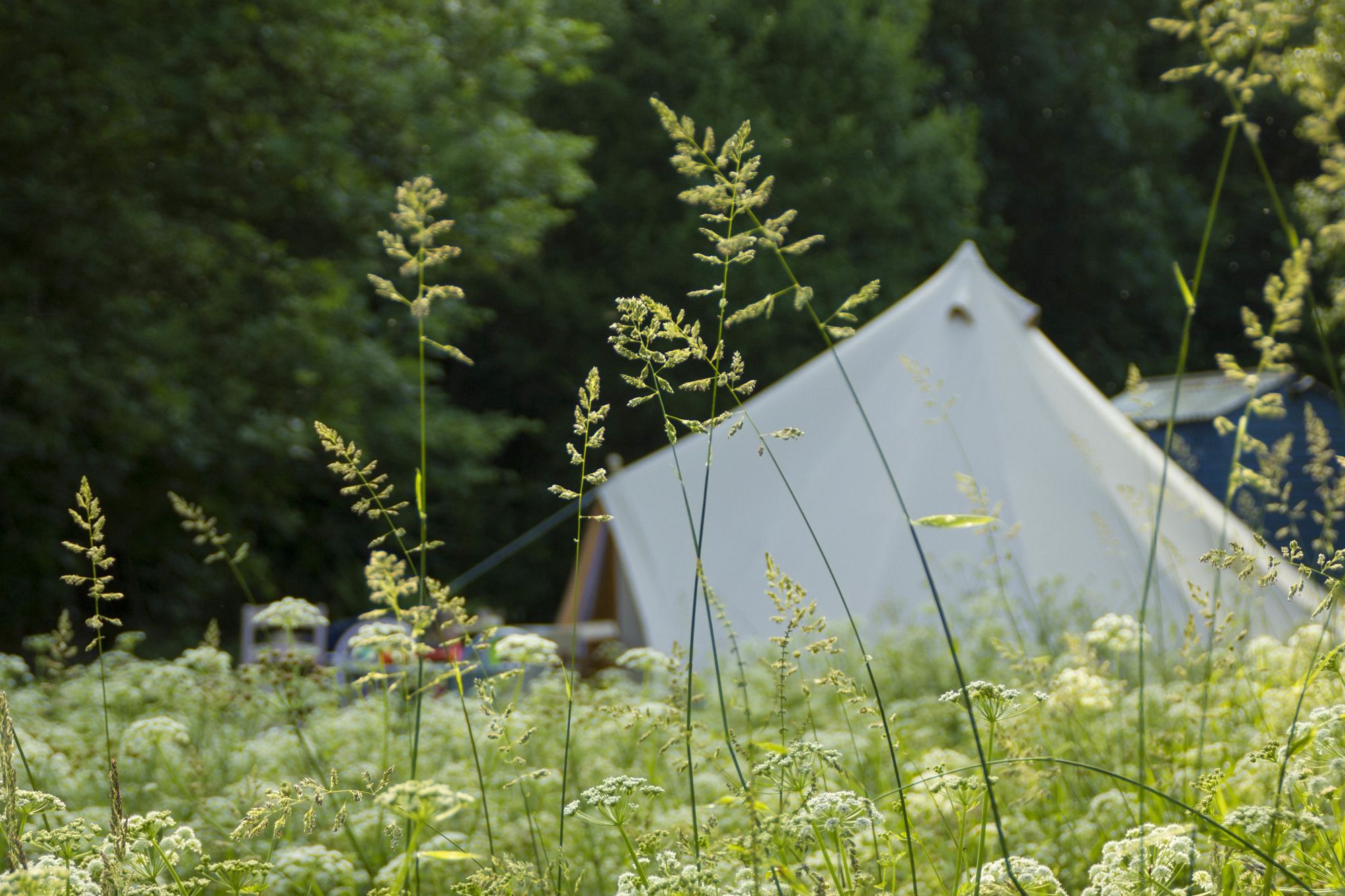 Glamping in Devon