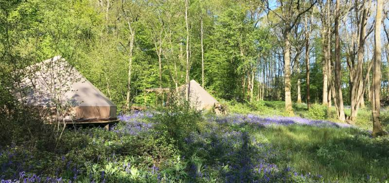 Bell tents in the bluebells at Wild Boar Wood Campsite in Sussex