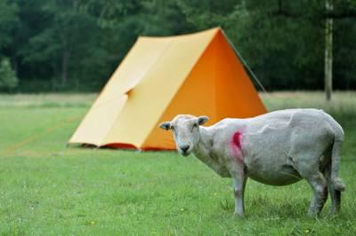 Tan Aeldroch Farm (Camp Snowdonia) Pont-y-Pant, Dolwyddelan, Conwy LL25 0LZ