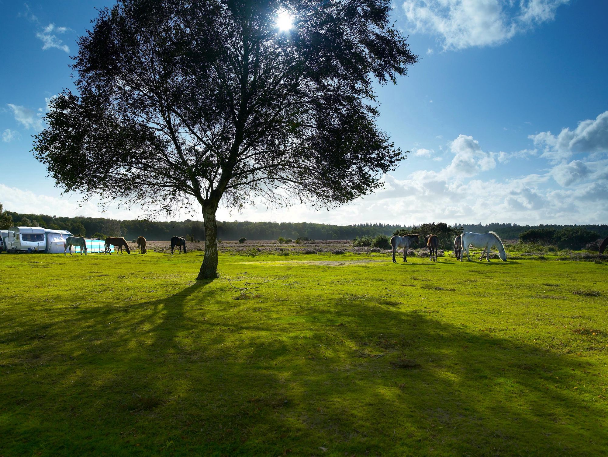 Campsites in New Forest