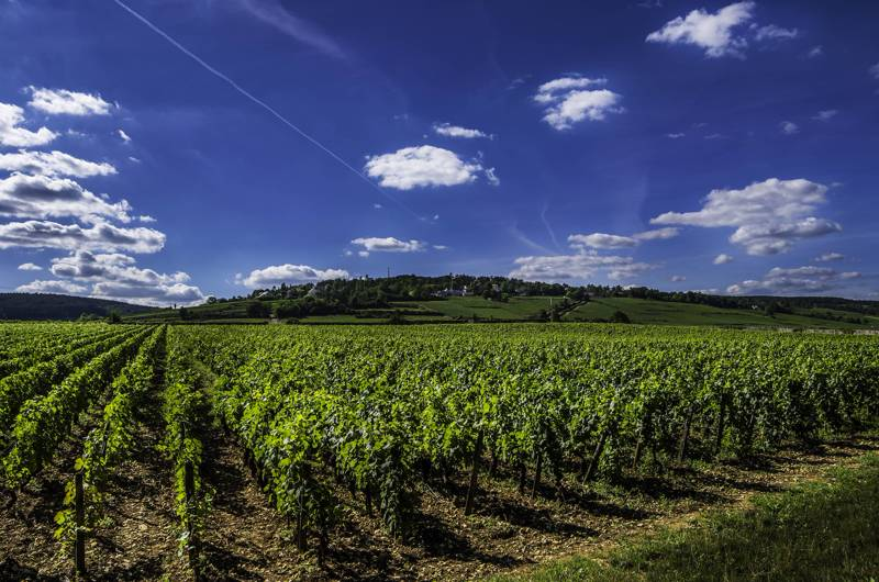 There are over 100 different vineyards in the Loire Valley region of France.