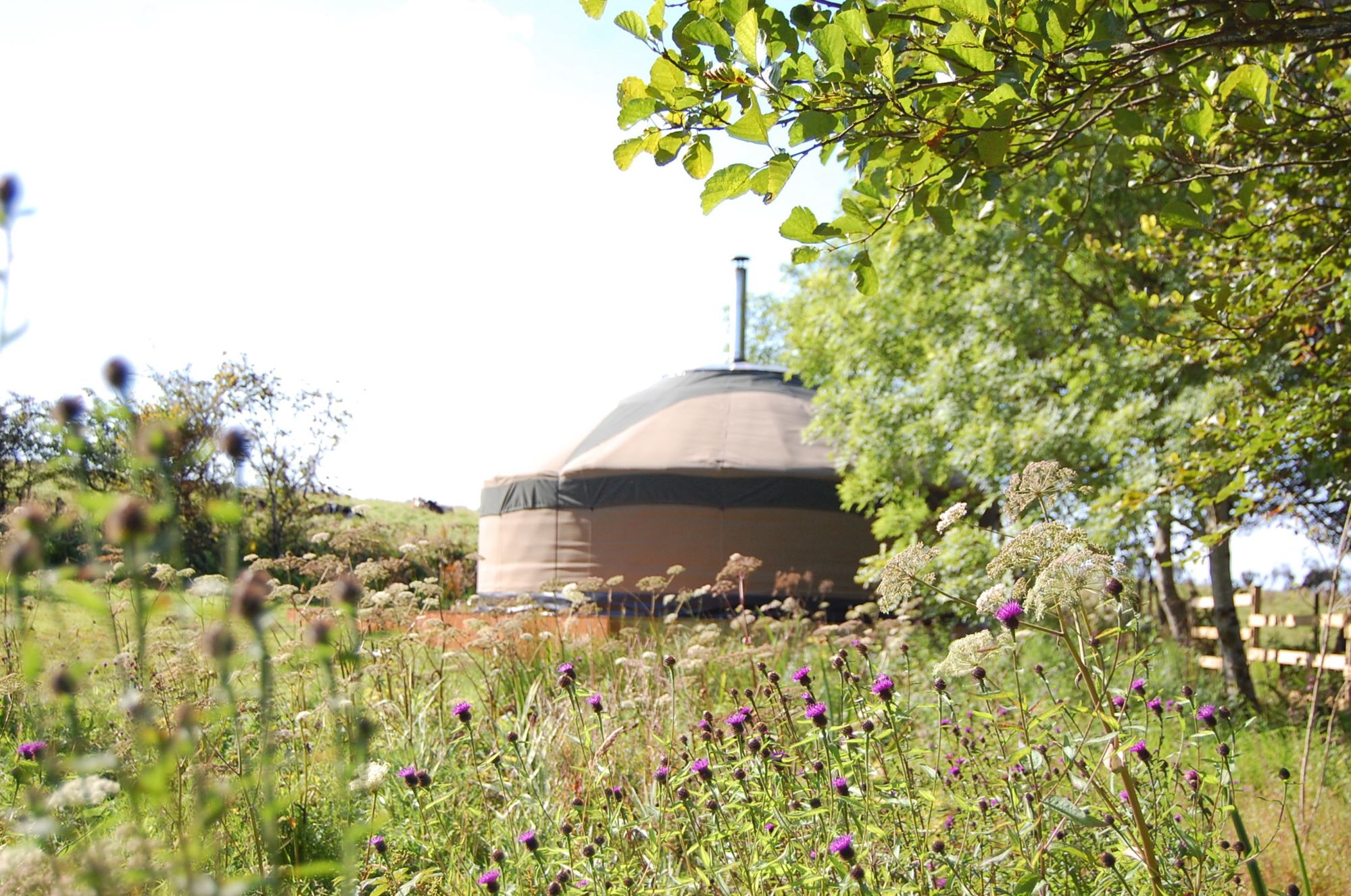Our Yurts are set in a young orchard
