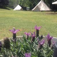 """COSY """"Belle"""" Tent 6m Grassland"""