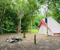 Woodland Camp Pitch