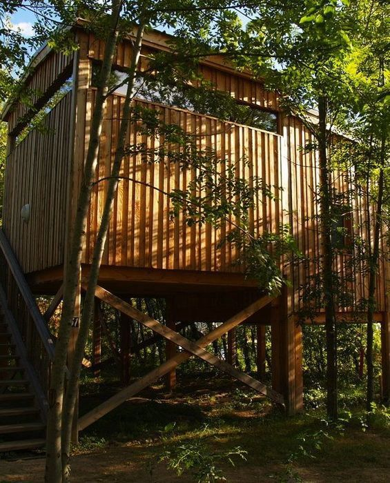 Tree House Camping