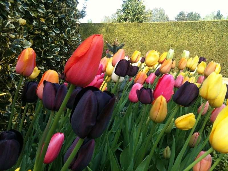 East Ruston Vicarage Garden