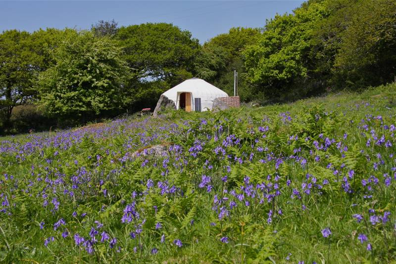 Ash Field Yurt with Yurt Pod