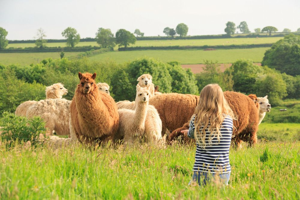 Hotels, Cottages, B&Bs & Glamping in Somerset - Cool Places to Stay in the UK
