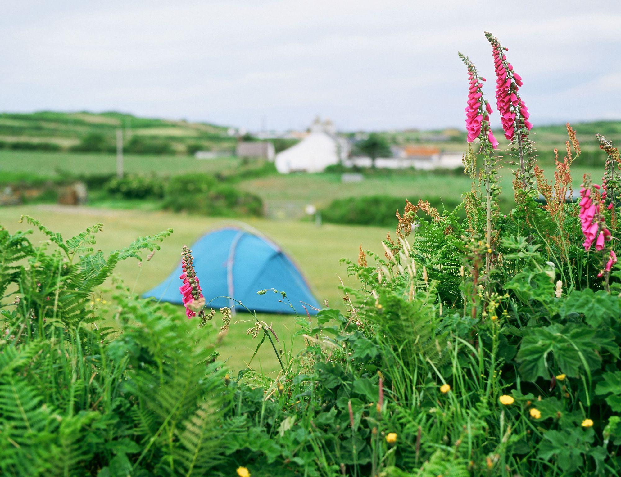 Campsites in Snowdonia