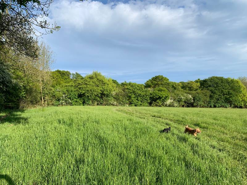 Hazel Grass pitches