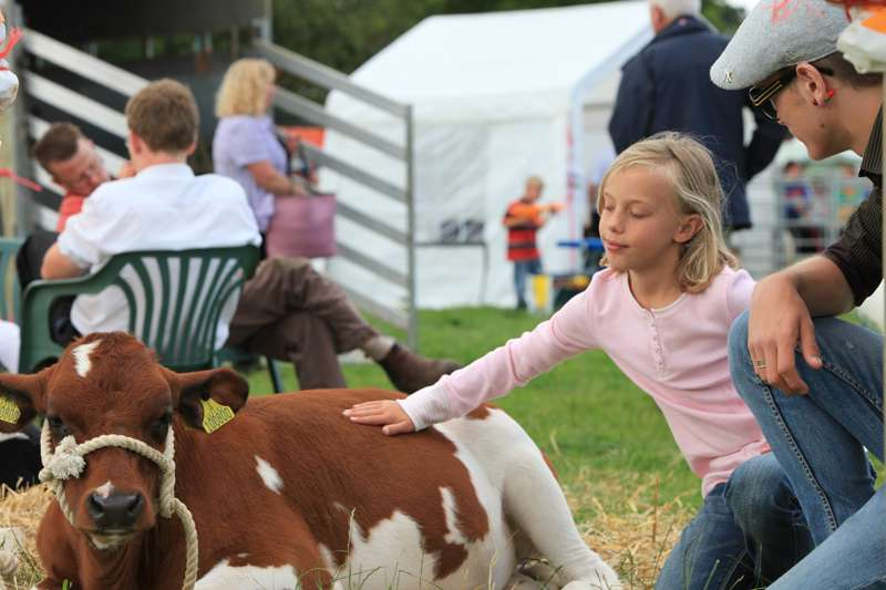 Ryedale Show