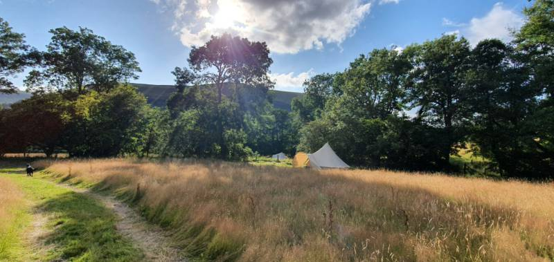 5m Bell Tent at lower end of Hafod Meadow