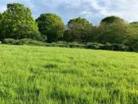 Elder Grass Pitch