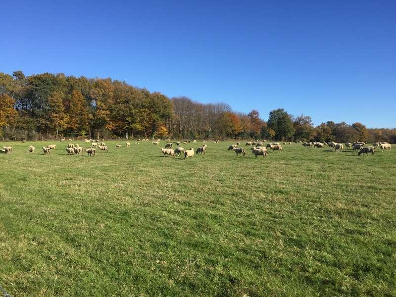 Limousin Farm Holidays