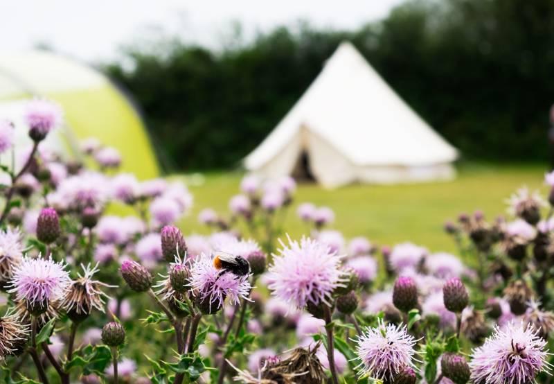 Trelispen Caravan & Camping Park Gorran, St Austell, Cornwall PL26 6NR