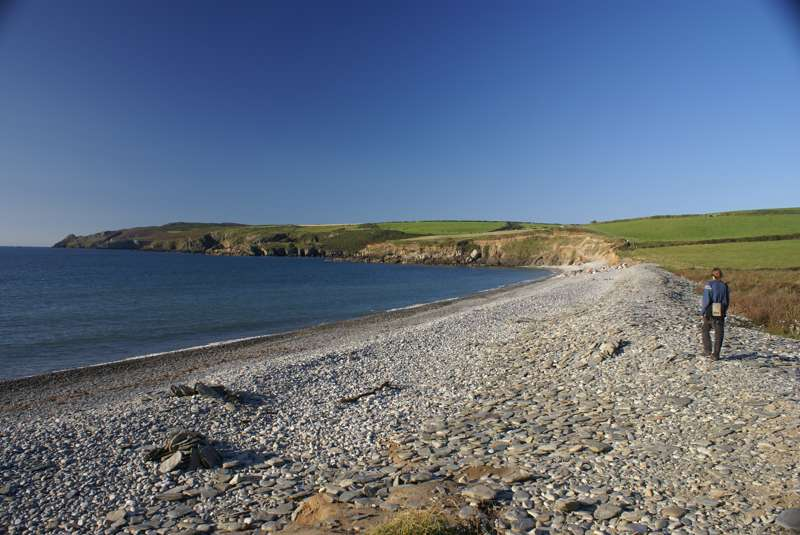 Wild About Pembrokeshire