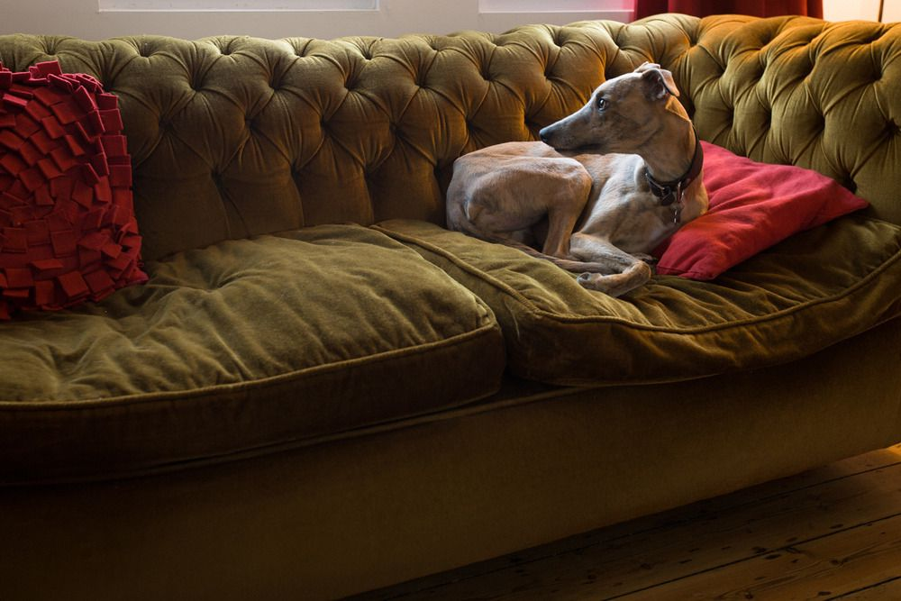 Dog-friendly B&Bs - Cool Places to Stay in the UK