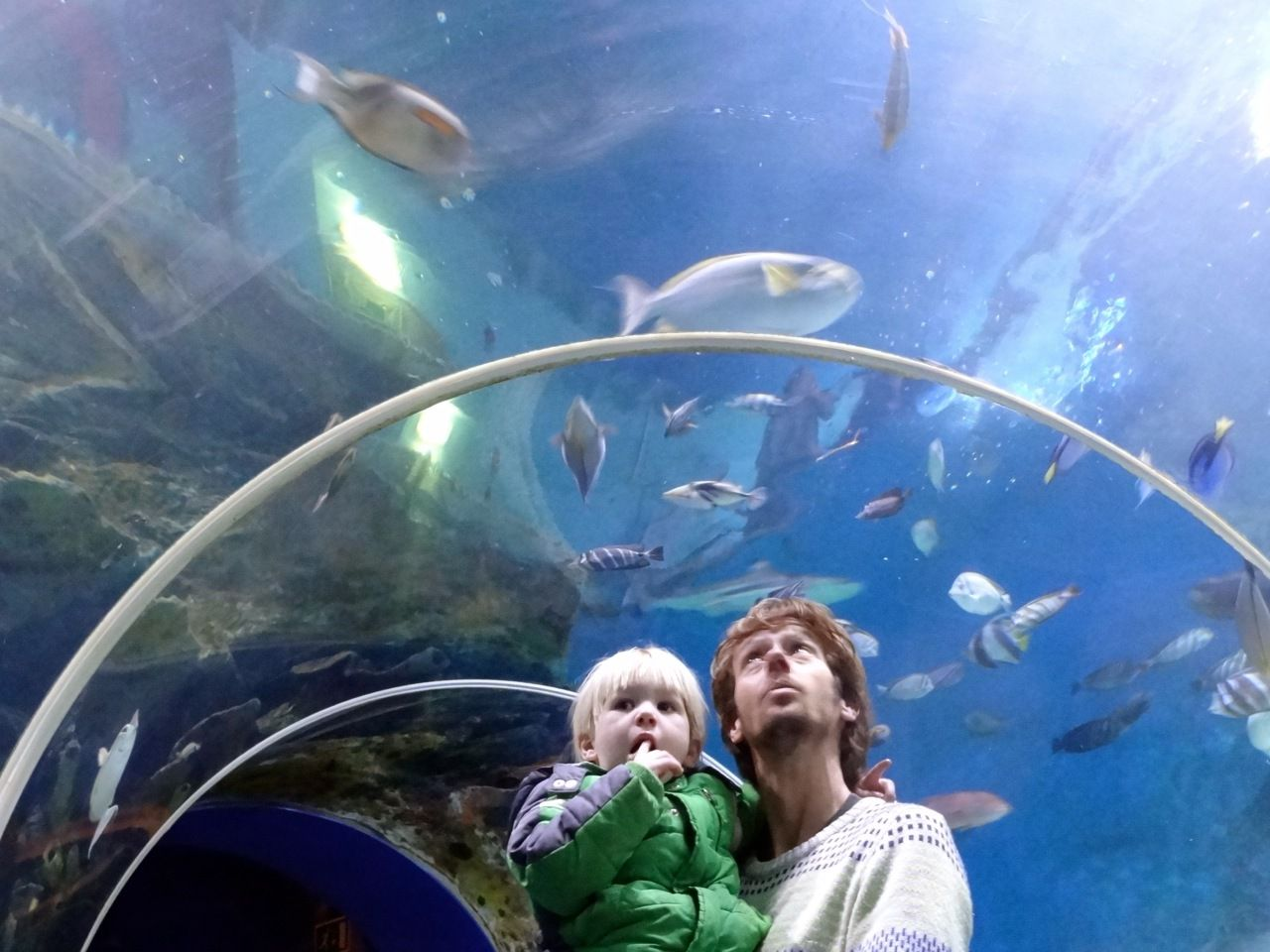 Blue Reef Aquarium