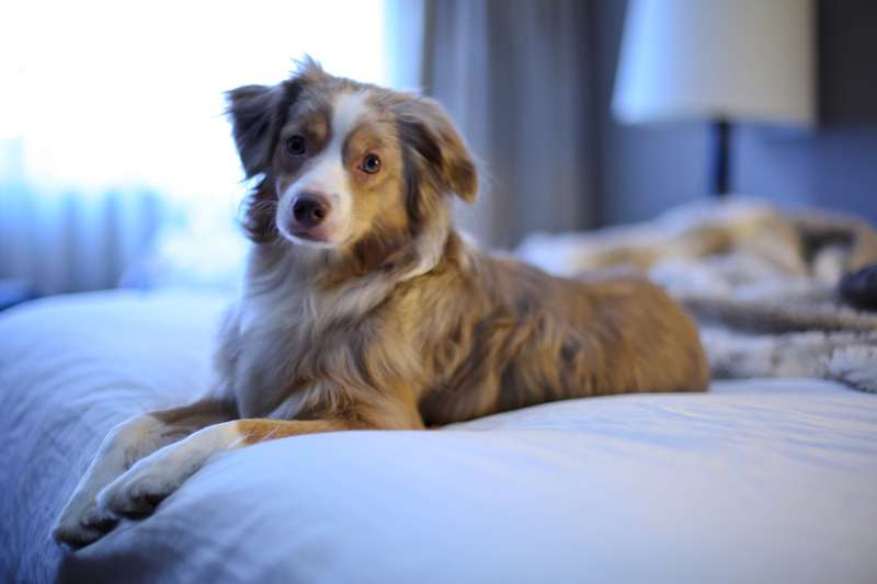 Dog-friendly hotels - Cool Places to Stay in the UK