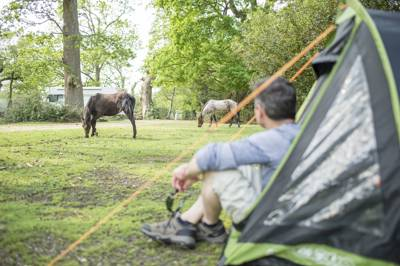 Ashurst Campsite Lyndhurst Road, Ashurst, Hampshire SO40 7AR