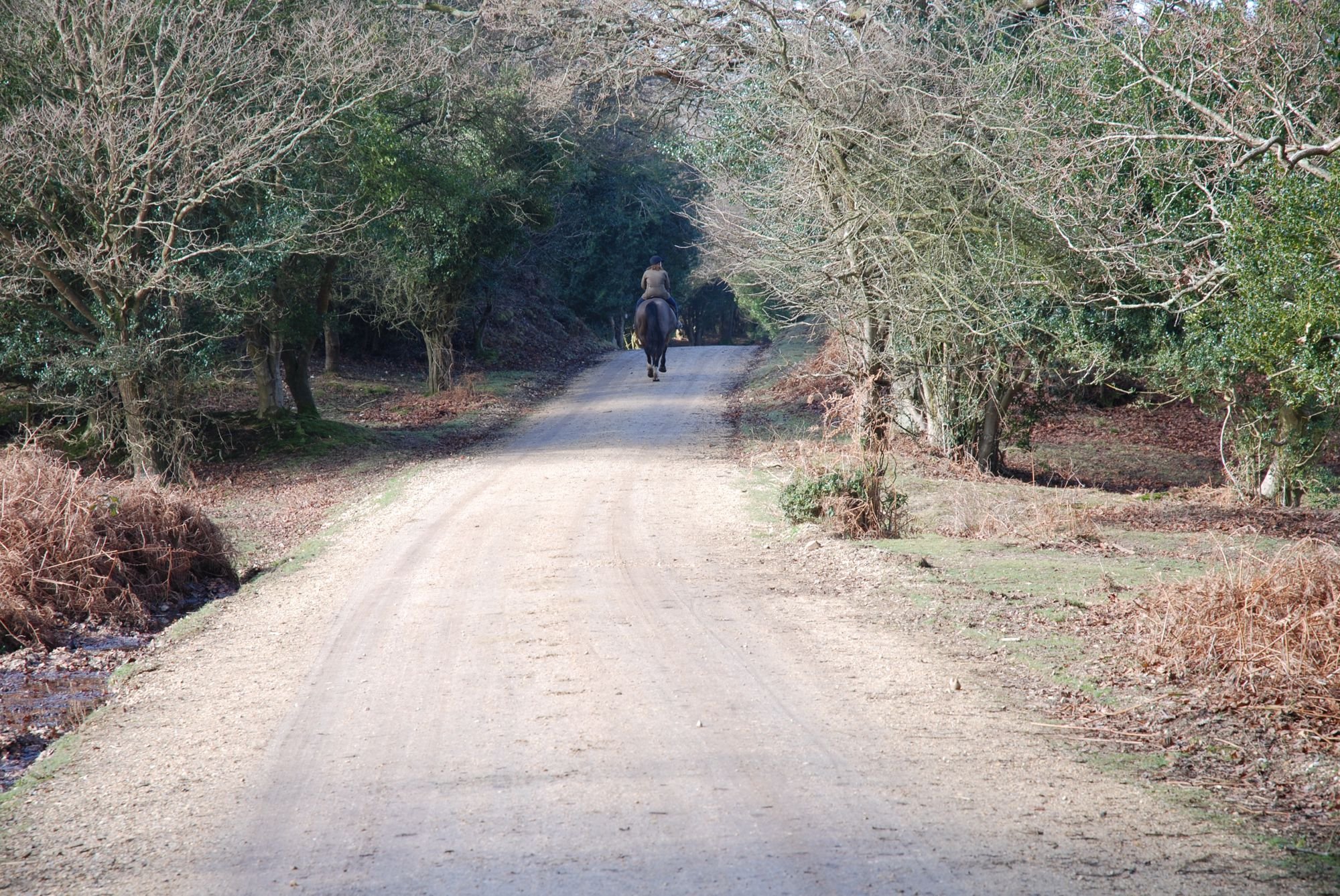 Fritham walk or cycle ride