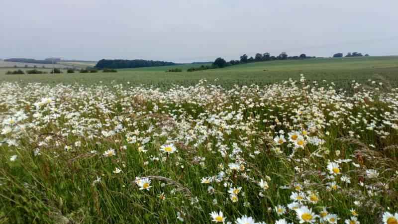 Grass pitch 1