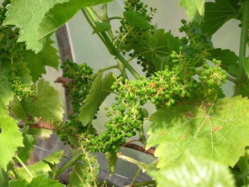 St Martin's Vineyard & Winery