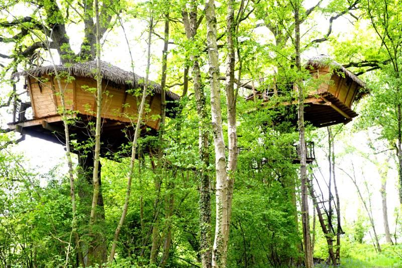 """Baron Perché"" Tree House"