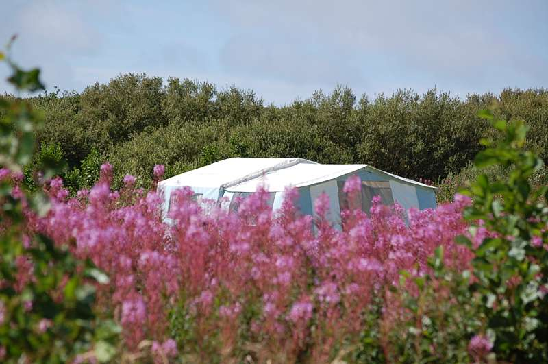 Ty Parke Farm Camping Parke, Llanreithan, St Davids, Pembrokeshire, SA62 5LG.