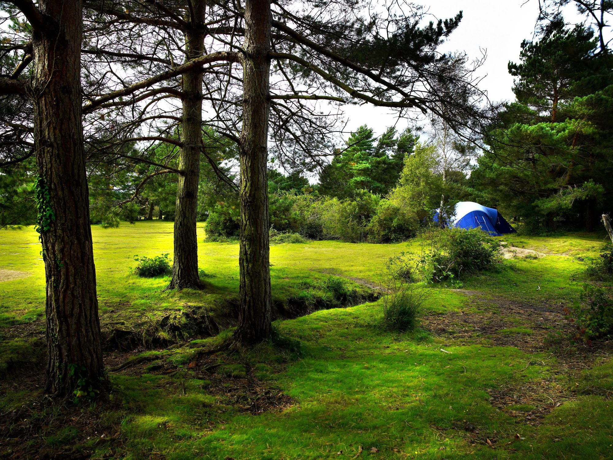 Campsites in Brockenhurst holidays at Cool Places