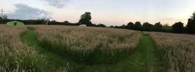 Cuckoo - Meadow Rise