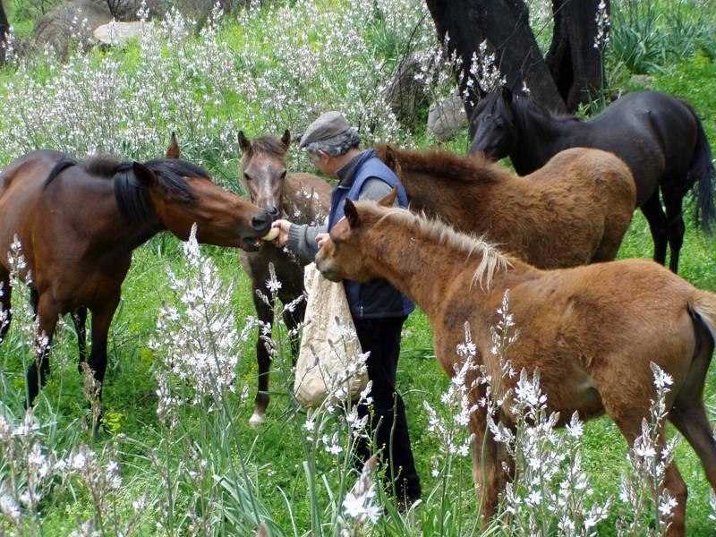 Costiolu Farm 08100 Nuoro, SS389 (Nuoro to Bitti), Sardinia