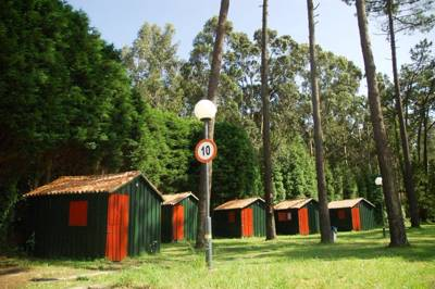 Peaceful and secluded camping in a lush Galcian forest of pine and eucalyptus trees.