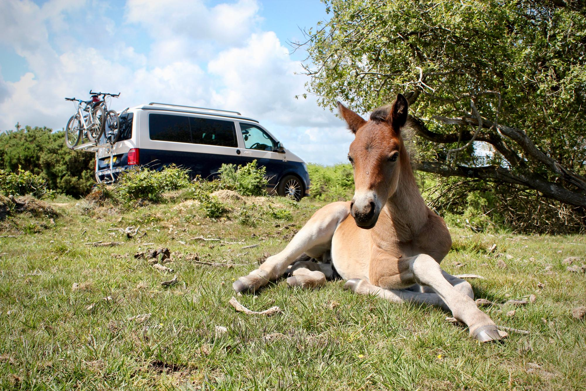 Campervan Hire in the New Forest | Motorhome Rental Companies
