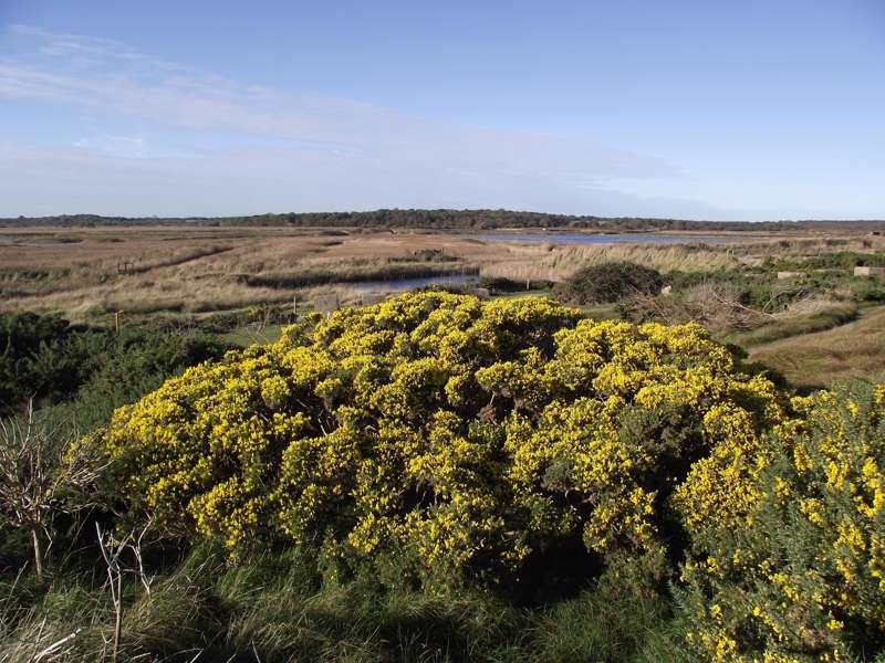 RSPB Minsmere Nature Reserve