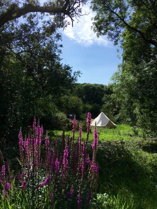 Bôn Camping Porterswell Farm, Roch hill, Haverfordwest, Newgale, Pembrokeshire SA62 6JX