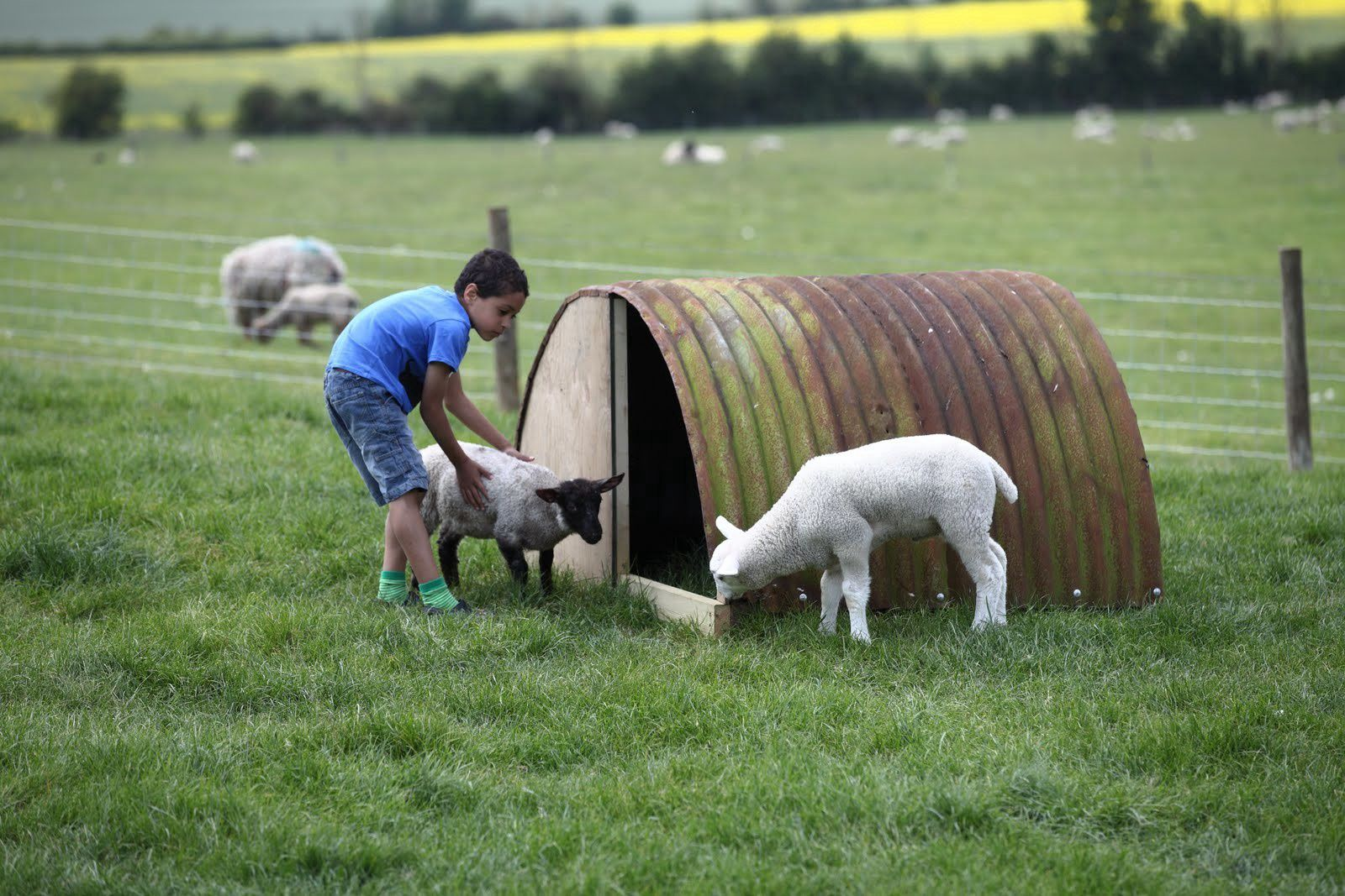 Campsites On the Farm – Bottle-feeding lambs and more – Cool Camping